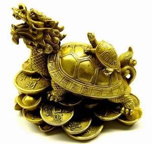 tortoise6